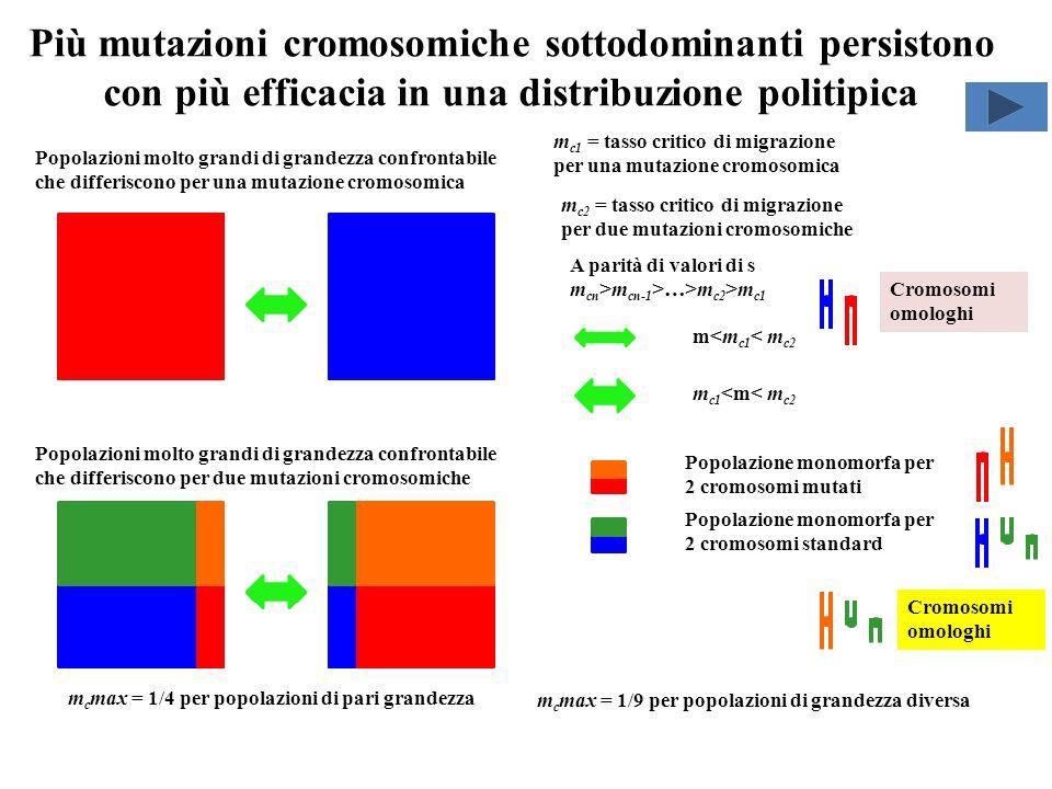 Più mutazioni cromosomiche sottodominanti persistono con più efficacia in una distribuzione politipica Popolazioni molto grandi di grandezza confronta