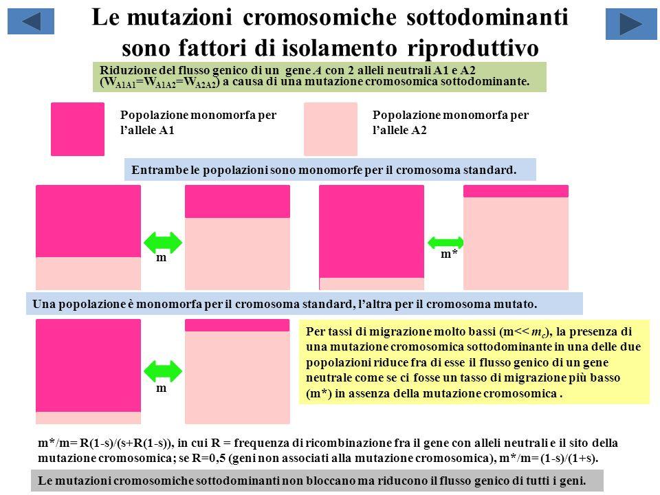 Le mutazioni cromosomiche sottodominanti sono fattori di isolamento riproduttivo m*/m= R(1-s)/(s+R(1-s)), in cui R = frequenza di ricombinazione fra i