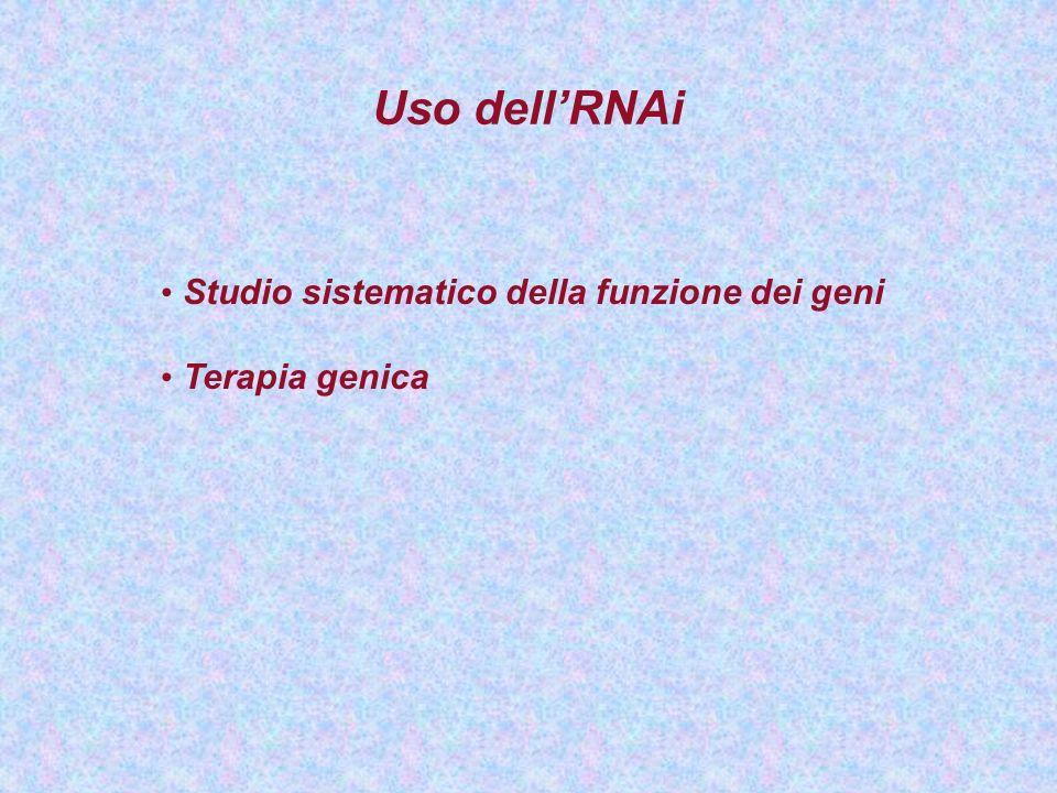 Uso dellRNAi Studio sistematico della funzione dei geni Terapia genica