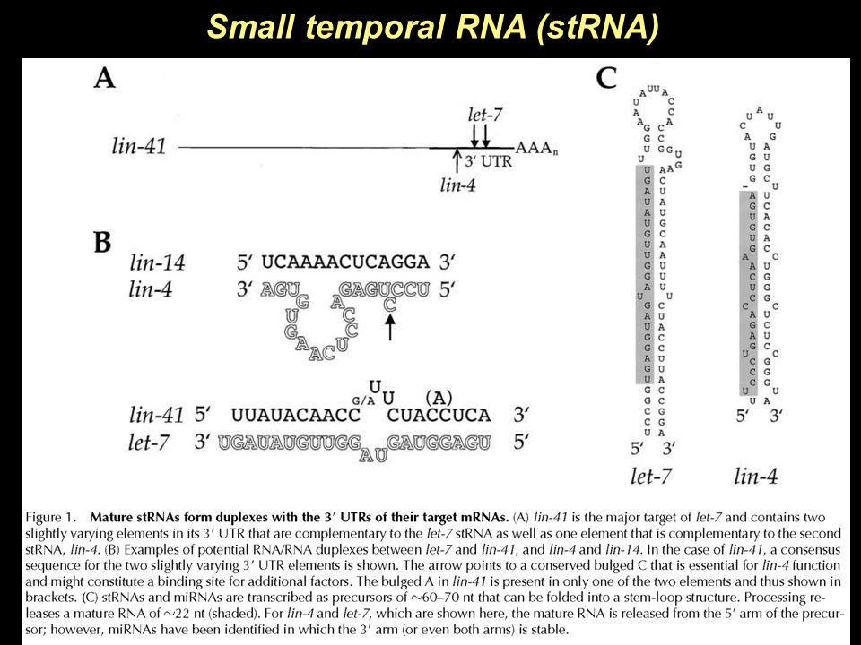 Small temporal RNA (stRNA)