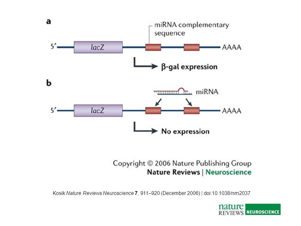 Kosik Nature Reviews Neuroscience 7, 911–920 (December 2006) | doi:10.1038/nrn2037