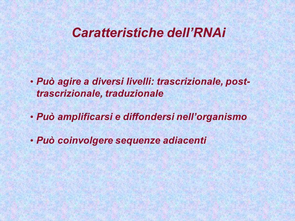 Caratteristiche dellRNAi Può agire a diversi livelli: trascrizionale, post- trascrizionale, traduzionale Può amplificarsi e diffondersi nellorganismo