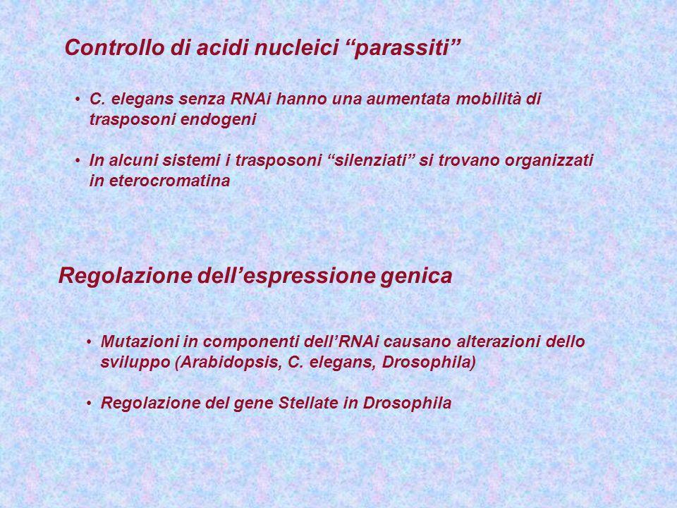 Controllo di acidi nucleici parassiti C. elegans senza RNAi hanno una aumentata mobilità di trasposoni endogeni In alcuni sistemi i trasposoni silenzi