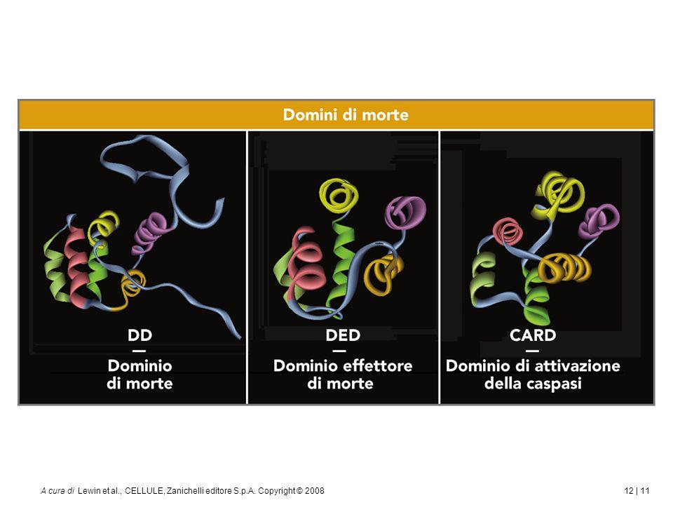 12 | 11A cura di Lewin et al., CELLULE, Zanichelli editore S.p.A. Copyright © 2008