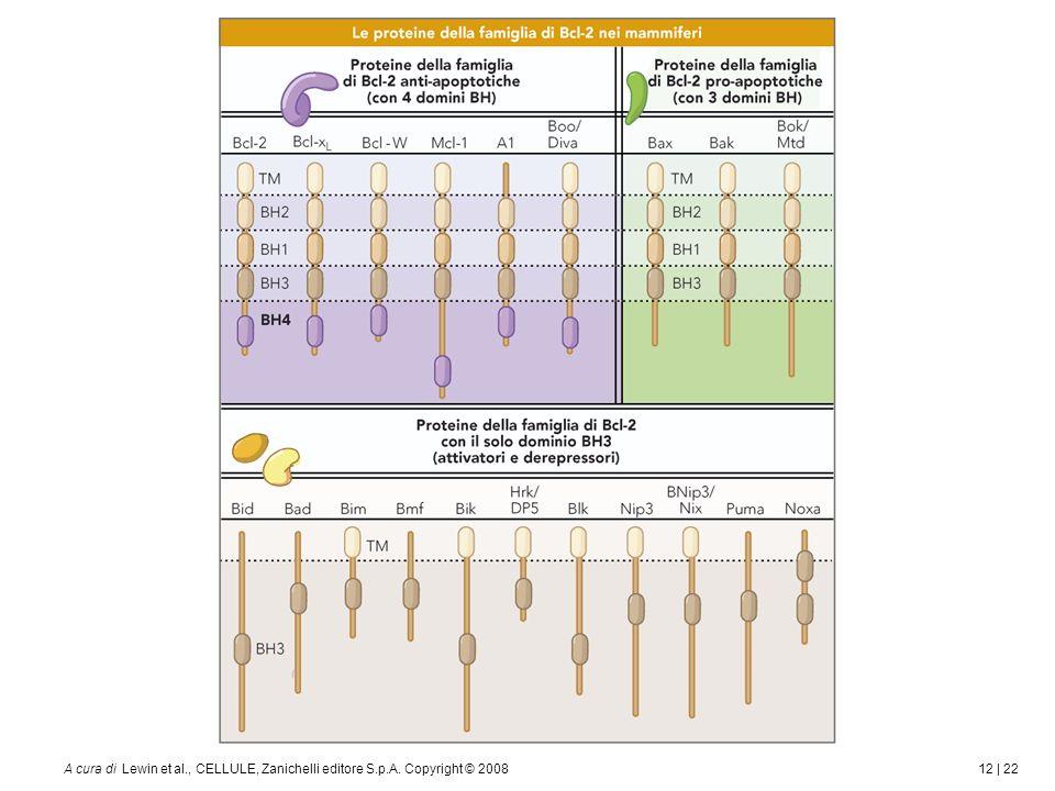 12 | 22A cura di Lewin et al., CELLULE, Zanichelli editore S.p.A. Copyright © 2008