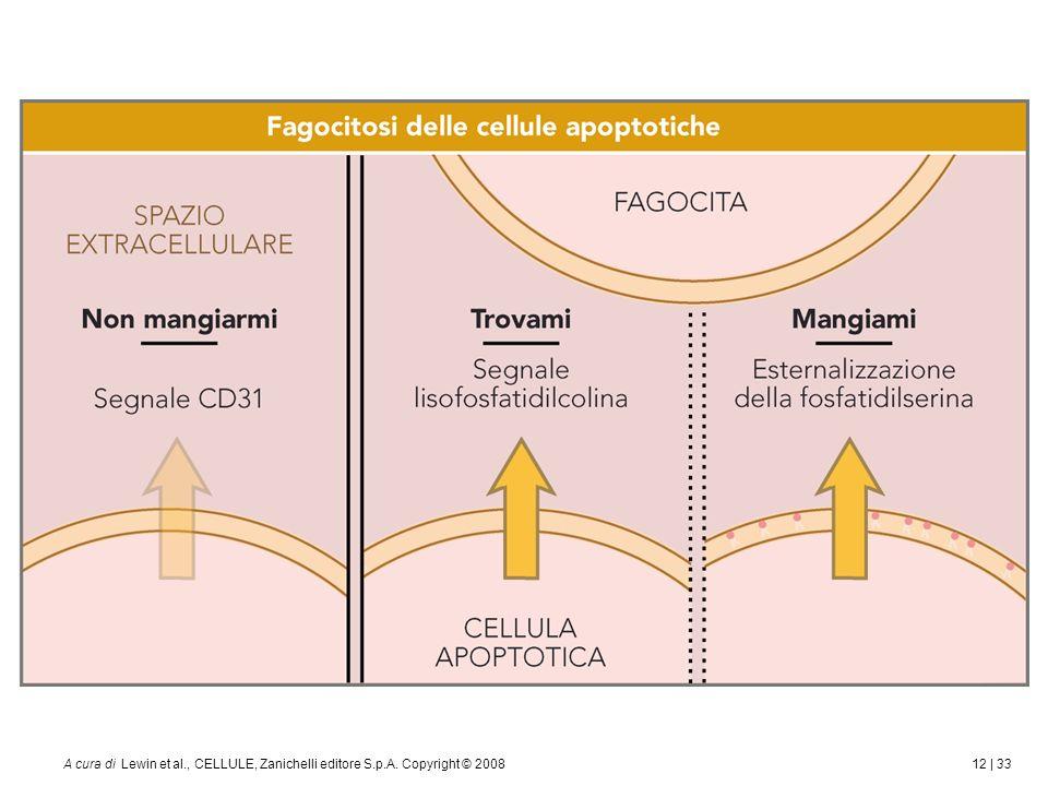 12 | 33A cura di Lewin et al., CELLULE, Zanichelli editore S.p.A. Copyright © 2008