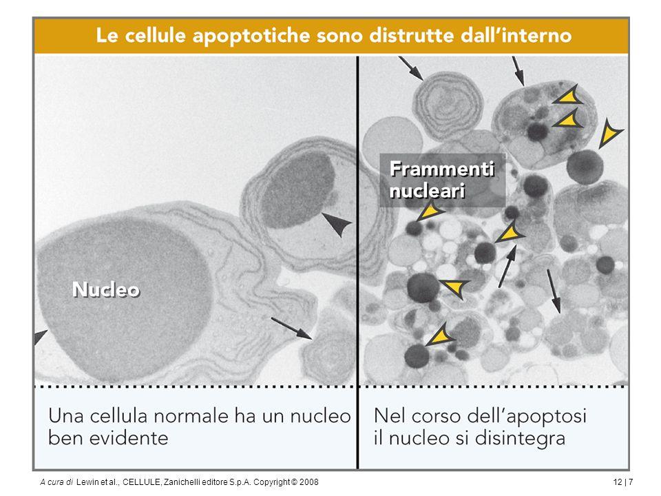 12 | 7A cura di Lewin et al., CELLULE, Zanichelli editore S.p.A. Copyright © 2008