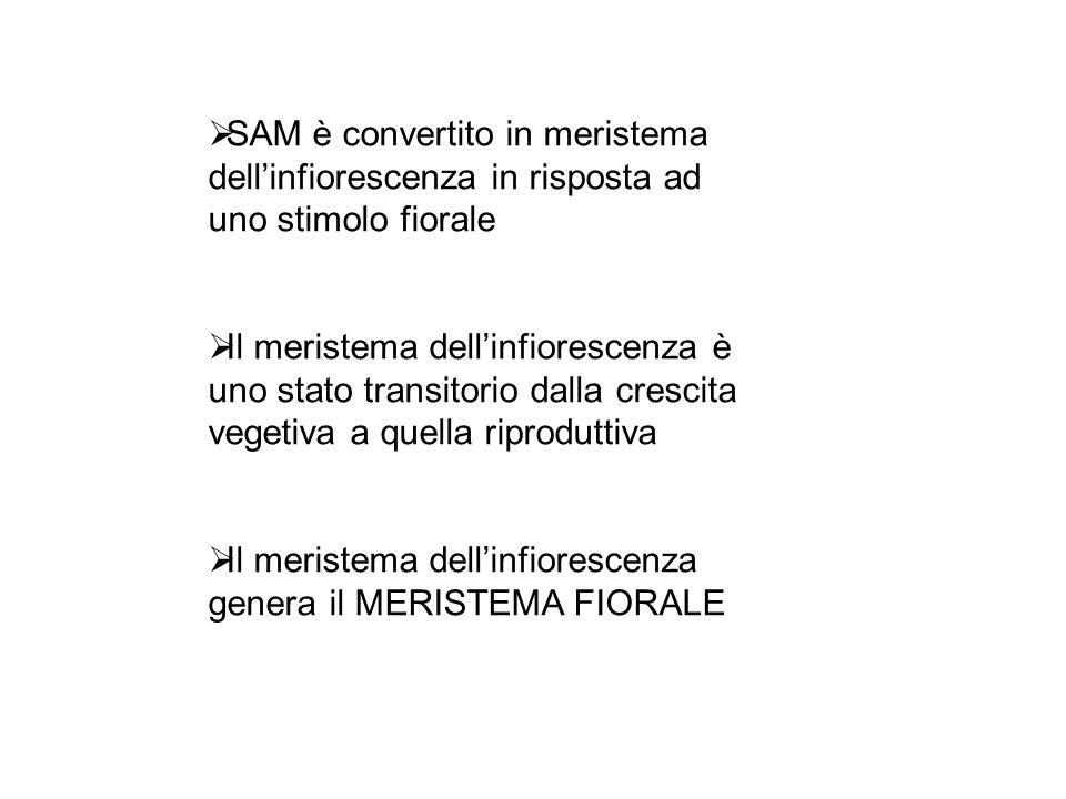SAM MI