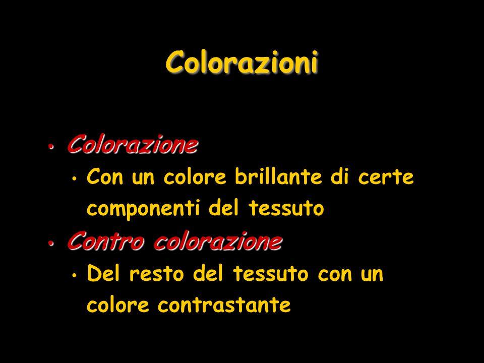 Colorazioni Colorazione Colorazione Con un colore brillante di certe componenti del tessuto Contro colorazione Contro colorazione Del resto del tessut