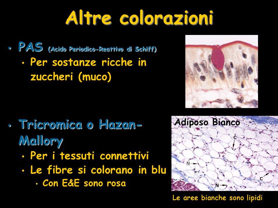 Altre colorazioni PAS (Acido Periodico-Reattivo di Schiff) PAS (Acido Periodico-Reattivo di Schiff) Per sostanze ricche in zuccheri (muco) Tricromica