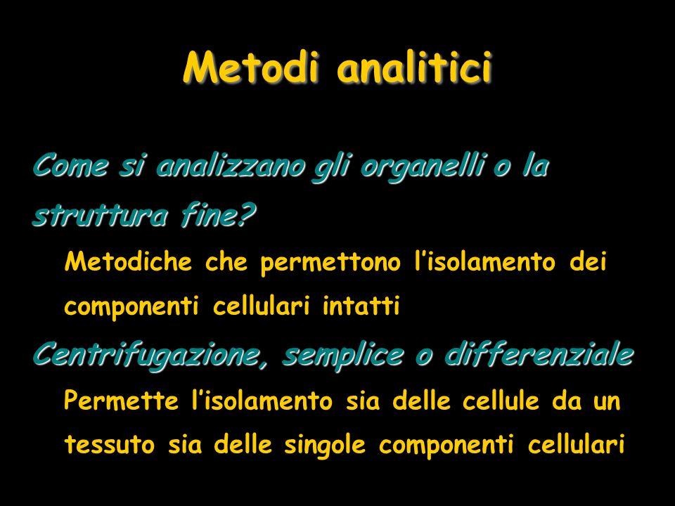 Metodi analitici Come si analizzano gli organelli o la struttura fine? Metodiche che permettono lisolamento dei componenti cellulari intatti Centrifug