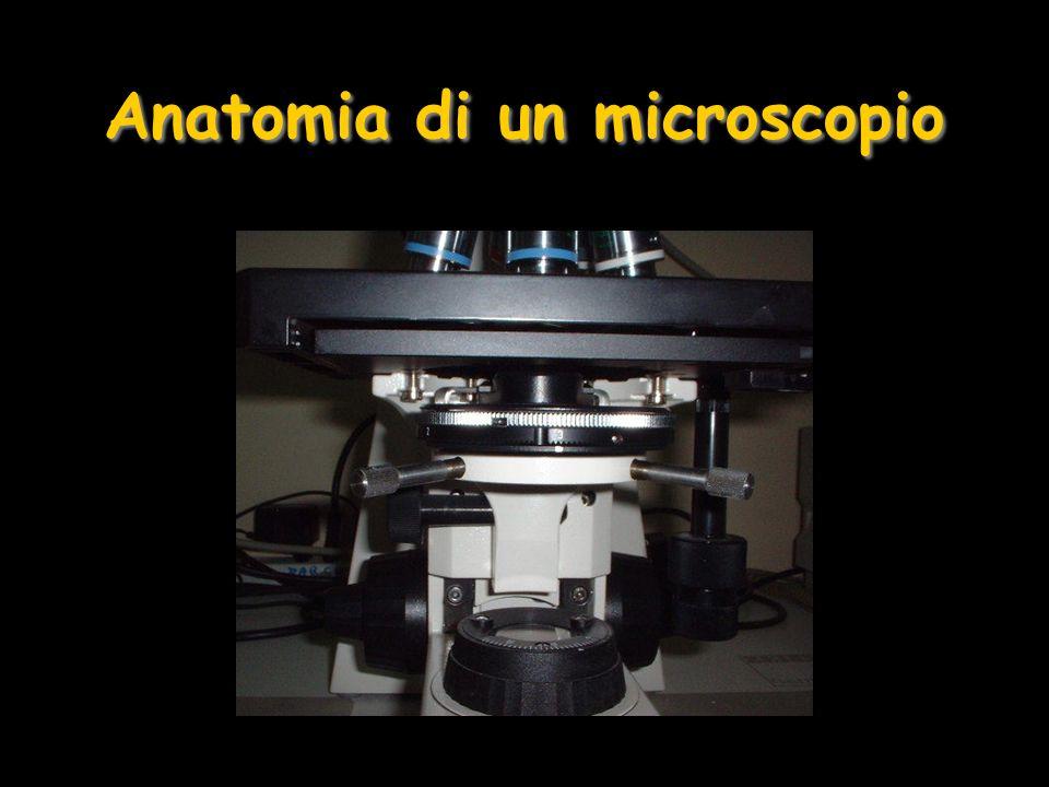 Microscopia Confocale La luce monocromatica, di lunghezza donda breve, è emessa da una sorgente laser, attraverso un diaframma e deviata da uno specchio dicroico, che permette il passaggio di determinate lunghezze donda Le lenti dellobbiettivo focalizzano la luce in un punto del piano ottico del campione I fluorocromi usati per colorare vengono eccitati ed emettono a lunghezza donda maggiore, in grado di attraversare lo specchio e focalizzarsi nel piano del diaframma Il foto-moltiplicatore amplifica lintensità del segnale e lo trasmette al computer che elabora limmagine La luce che proviene dai piani superiori o inferiori al piano focale non passa attraverso il diaframma e non contribuisce alla formazione dellimmagine Diversi punti dello stesso piano e dei paini consecutivi vengono illuminati e registrati mediante la scansione col laser