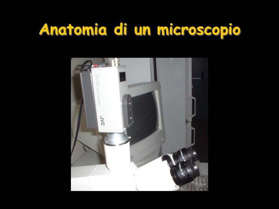 Preparazione di un Campione Biologico per la Microscopia Ottica Acquisizione Acquisizione del campione e taglio in pezzi (1cm 3 ) Biopsia, intervento chirurgico, autospia postmortem Prelevato rapidamente utilizzando strumenti adatti (bisturi) Acquisizione Acquisizione del campione e taglio in pezzi (1cm 3 ) Biopsia, intervento chirurgico, autospia postmortem Prelevato rapidamente utilizzando strumenti adatti (bisturi)