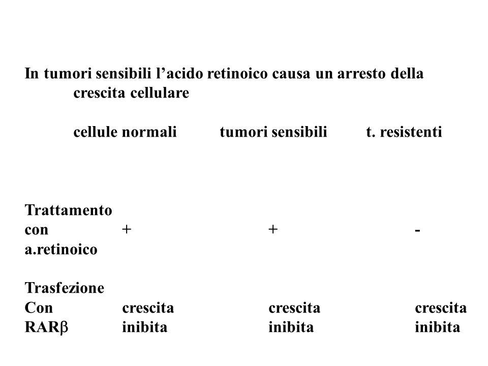 In tumori sensibili lacido retinoico causa un arresto della crescita cellulare cellule normalitumori sensibilit. resistenti Trattamento con++- a.retin