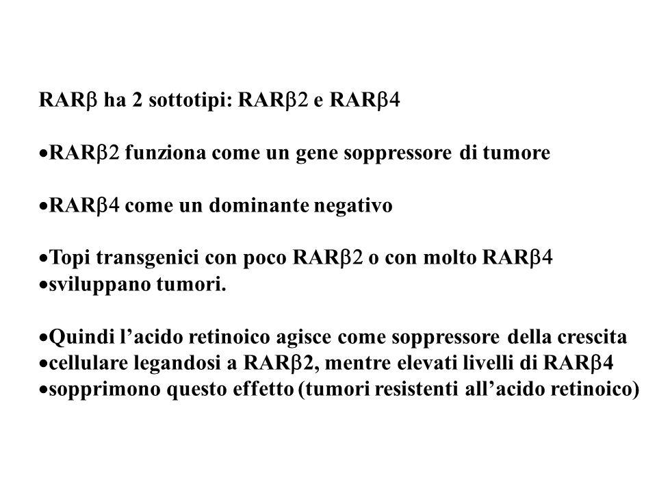 RAR ha 2 sottotipi: RAR e RAR RAR funziona come un gene soppressore di tumore RAR come un dominante negativo Topi transgenici con poco RAR o con molto