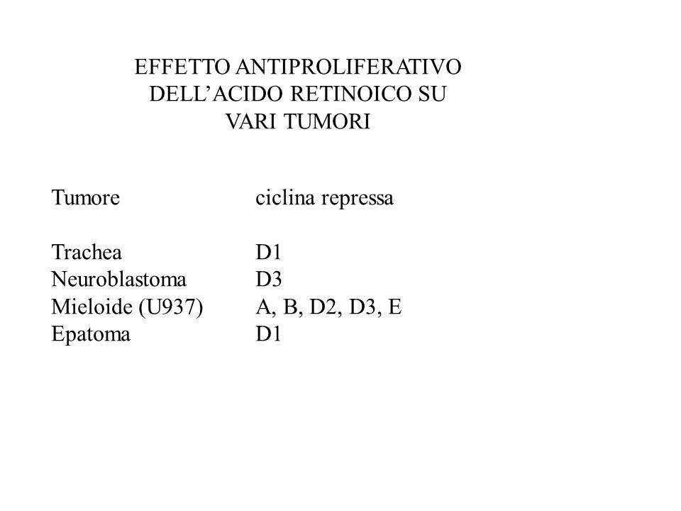 EFFETTO ANTIPROLIFERATIVO DELLACIDO RETINOICO SU VARI TUMORI Tumoreciclina repressa TracheaD1 NeuroblastomaD3 Mieloide (U937)A, B, D2, D3, E Epatoma D