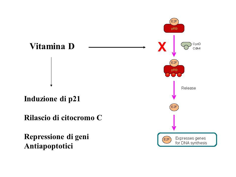 Vitamina D X Induzione di p21 Rilascio di citocromo C Repressione di geni Antiapoptotici
