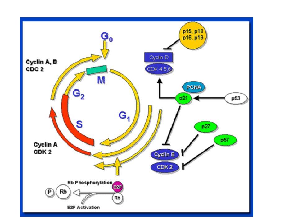 Produzione della Vitamina D da UVB UVB (290-315 nm) converte 7-deidrocolesterolo in pre-vitamina D Previtamina D3 subisce una isomerizzazione che risulta nella formazione della vitamina D3 (25 idrossivitamina D (25(OH)D)) Questa e convertita in 1,25-diidrossivitamina D3 (1,25(OH) 2 D3) nel fegato e nei reni