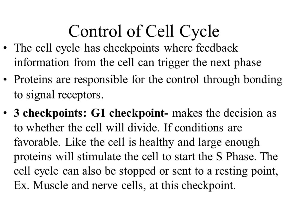 G2 checkpoint- DNA replication is checked hear by DNA repair enzymes.