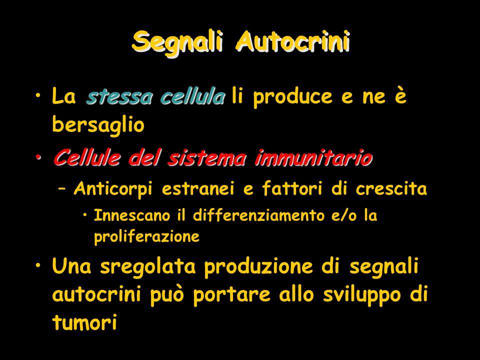 Segnali Autocrini stessa cellulaLa stessa cellula li produce e ne è bersaglio Cellule del sistema immunitarioCellule del sistema immunitario –Anticorp