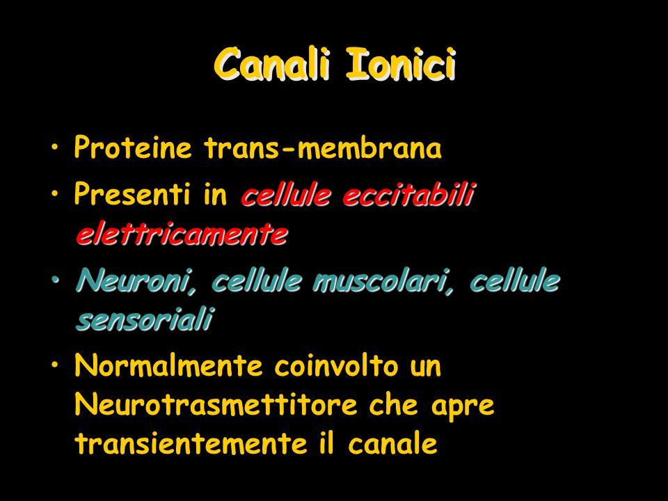 Canali Ionici Proteine trans-membrana cellule eccitabili elettricamentePresenti in cellule eccitabili elettricamente Neuroni, cellule muscolari, cellu