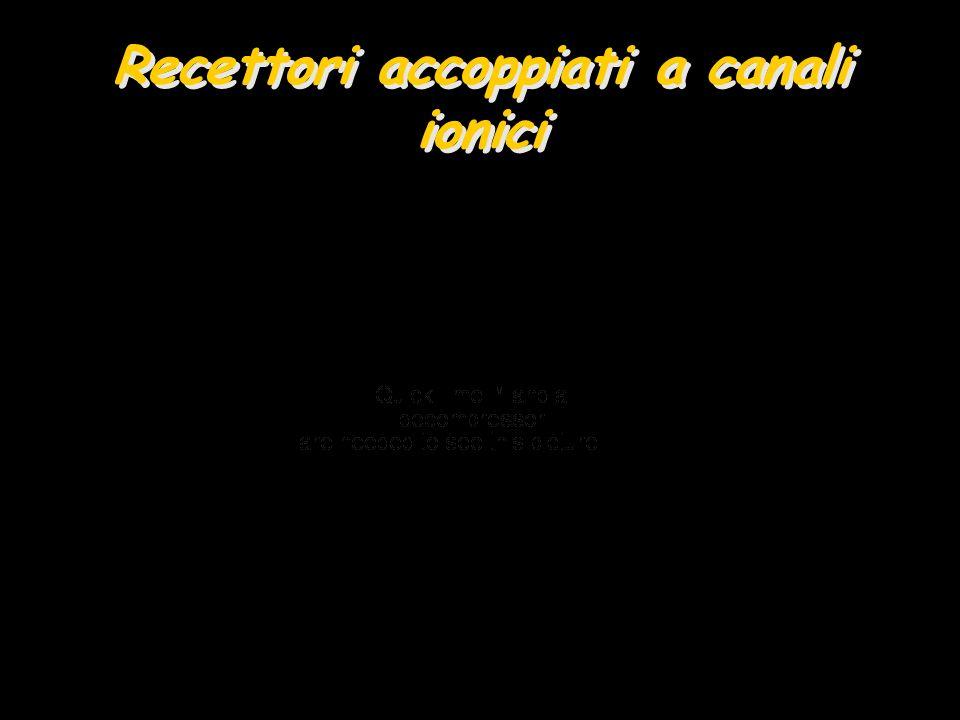 Recettori accoppiati a canali ionici