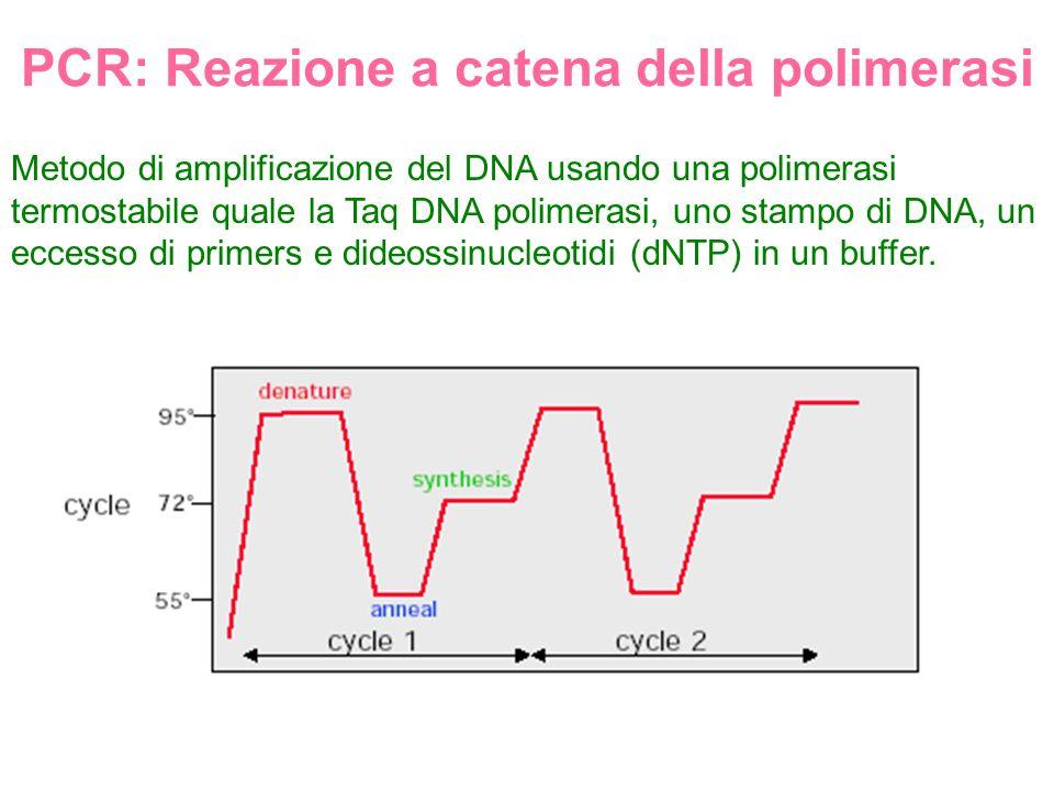 PCR: Reazione a catena della polimerasi Metodo di amplificazione del DNA usando una polimerasi termostabile quale la Taq DNA polimerasi, uno stampo di