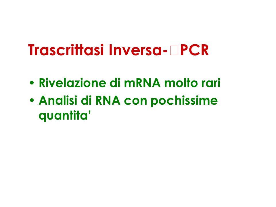 Trascrittasi Inversa-PCR Rivelazione di mRNA molto rari Analisi di RNA con pochissime quantita