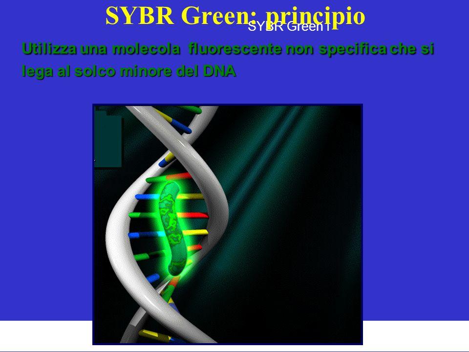 SYBR Green I SYBR Green: principio Utilizza una molecola fluorescente non specifica che si lega al solco minore del DNA