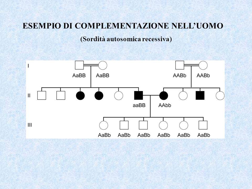 ESEMPIO DI COMPLEMENTAZIONE NELLUOMO (Sordità autosomica recessiva)