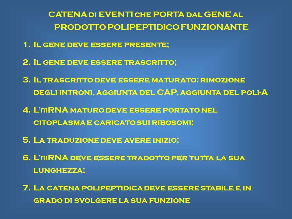 CATENA di EVENTI che PORTA dal GENE al PRODOTTO POLIPEPTIDICO FUNZIONANTE 1.Il gene deve essere presente; 2.Il gene deve essere trascritto; 3.Il trasc