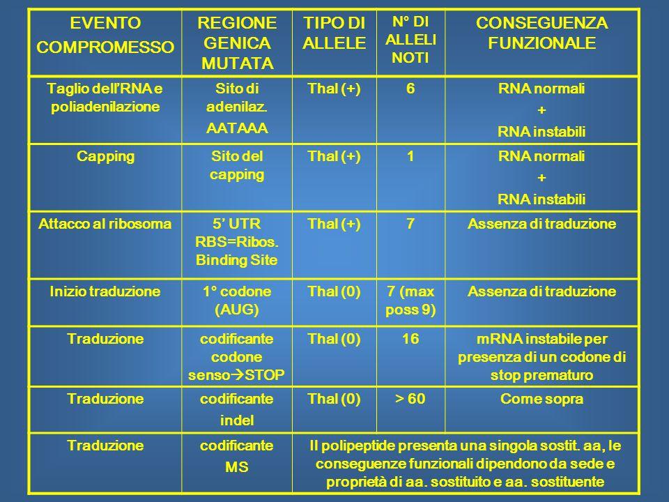 EVENTO COMPROMESSO REGIONE GENICA MUTATA TIPO DI ALLELE N° DI ALLELI NOTI CONSEGUENZA FUNZIONALE Taglio dellRNA e poliadenilazione Sito di adenilaz. A