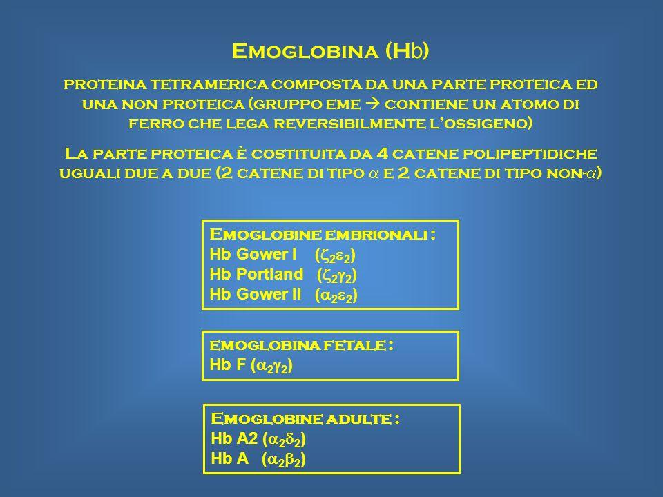 Emoglobina (H b ) proteina tetramerica composta da una parte proteica ed una non proteica (gruppo eme contiene un atomo di ferro che lega reversibilme