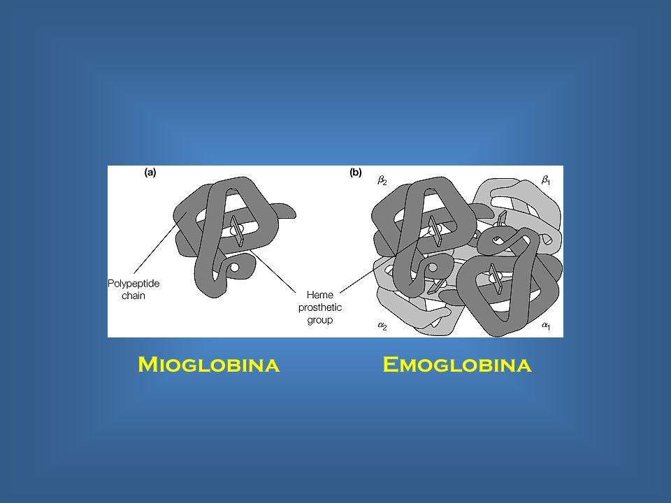 MioglobinaEmoglobina