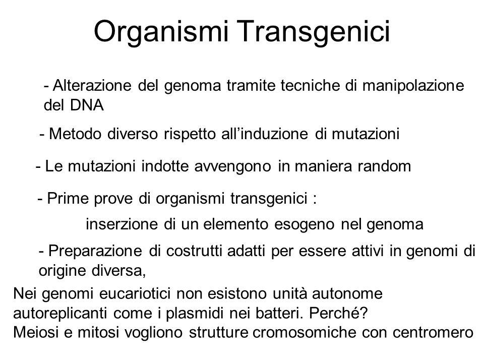 Organismi Transgenici - Alterazione del genoma tramite tecniche di manipolazione del DNA - Metodo diverso rispetto allinduzione di mutazioni - Le muta