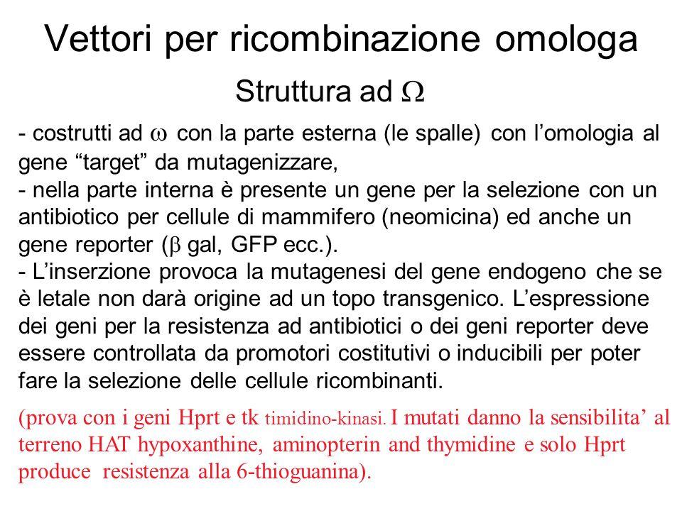 Vettori per ricombinazione omologa Struttura ad - costrutti ad con la parte esterna (le spalle) con lomologia al gene target da mutagenizzare, - nella