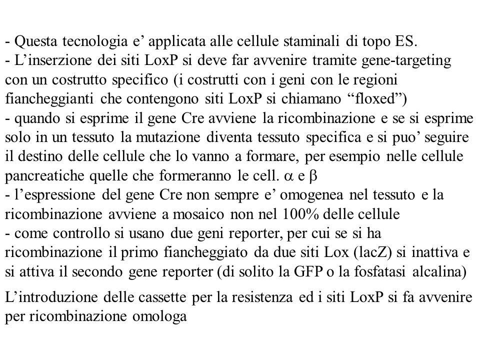 - Questa tecnologia e applicata alle cellule staminali di topo ES. - Linserzione dei siti LoxP si deve far avvenire tramite gene-targeting con un cost