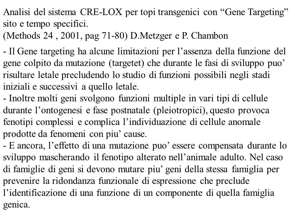 Analisi del sistema CRE-LOX per topi transgenici con Gene Targeting sito e tempo specifici. (Methods 24, 2001, pag 71-80) D.Metzger e P. Chambon - Il