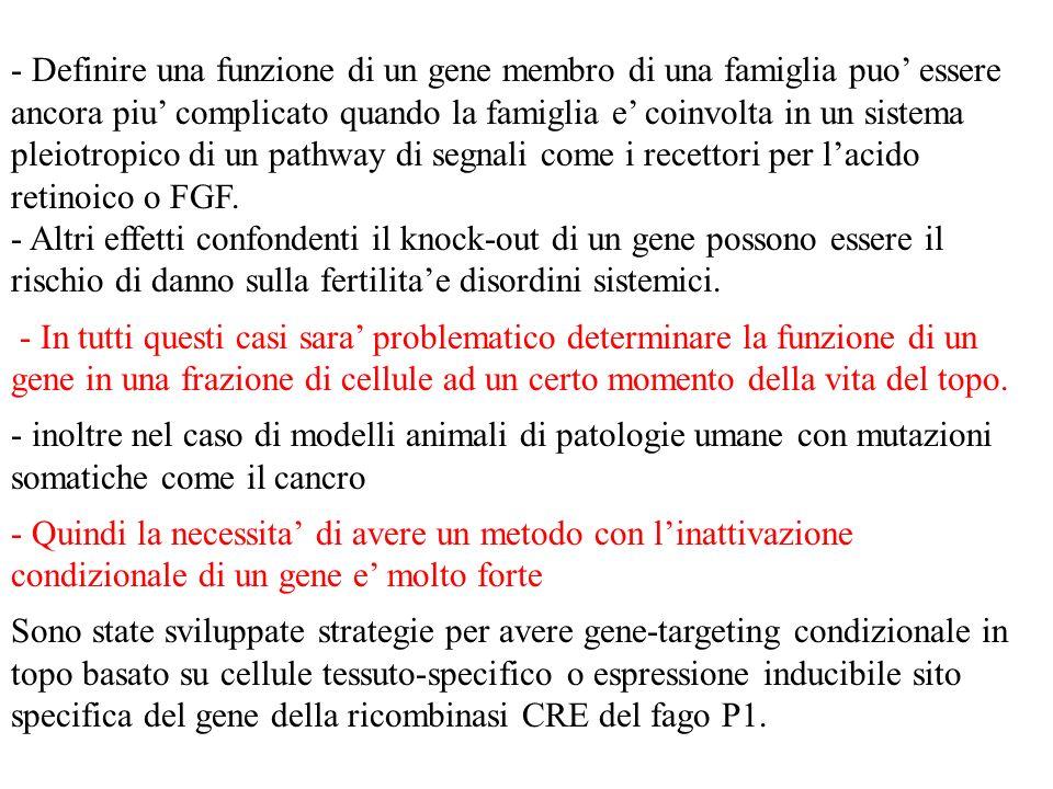- Definire una funzione di un gene membro di una famiglia puo essere ancora piu complicato quando la famiglia e coinvolta in un sistema pleiotropico d