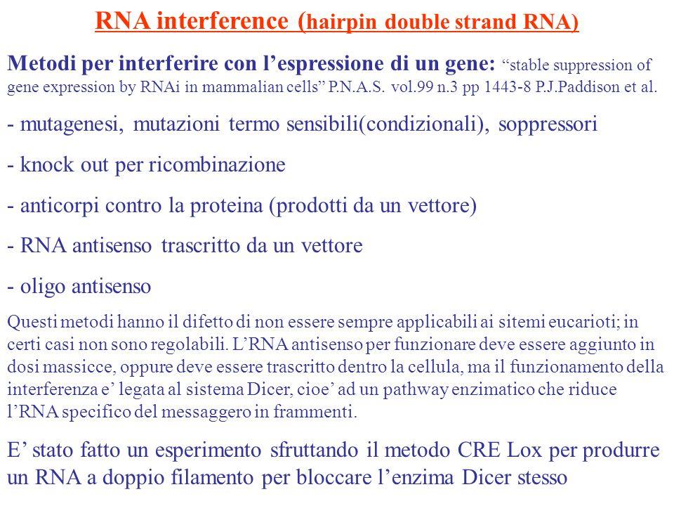 RNA interference ( hairpin double strand RNA) Metodi per interferire con lespressione di un gene: stable suppression of gene expression by RNAi in mam
