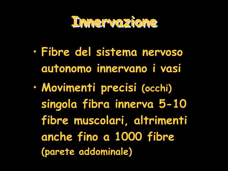 Innervazione Fibre del sistema nervoso autonomo innervano i vasi Movimenti precisi (occhi) singola fibra innerva 5-10 fibre muscolari, altrimenti anch