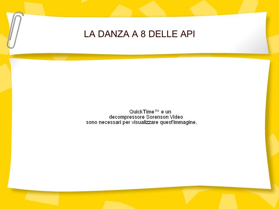 LA DANZA A 8 DELLE API