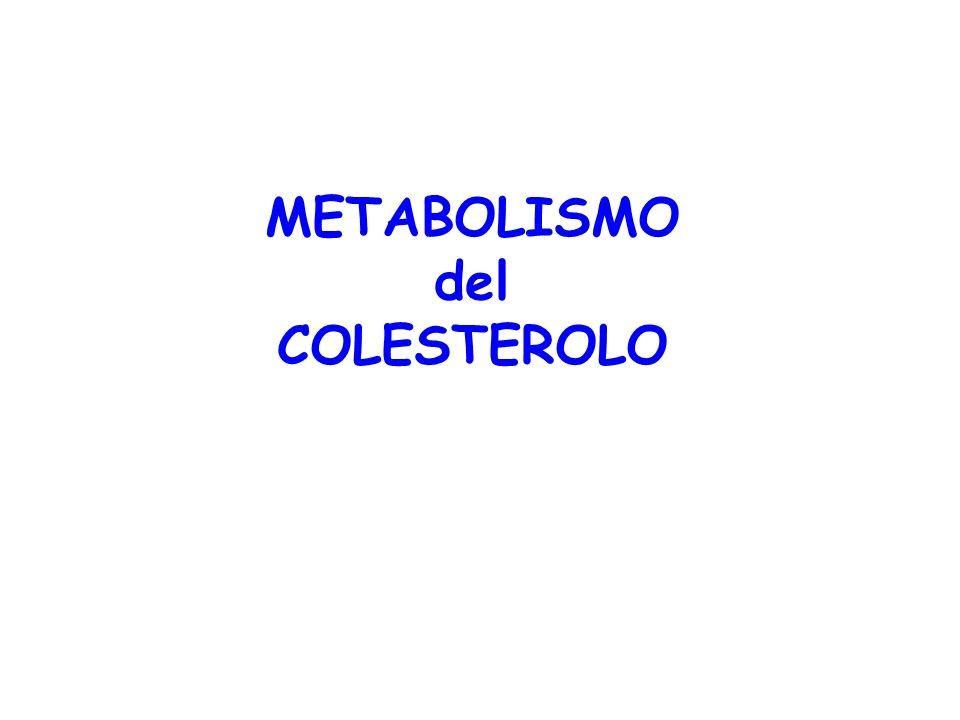 A PARITA DI INTROITO CALORICO Acidi grassi saturi (e trans insaturi <5% nella carne e latte ruminanti) Saccarosio, fruttosio(generano trigliceridi) Colesterolo(effetto minore di grassi saturi) = Acidi grassi monoinsaturi effetto neutro o positivo (altri componenti) Acidi grassi polinsaturi n-6 ed n-3 Dieta ipocalorica e calo ponderale Attività fisica aerobica ( HDL) Fibra alimentare; Fitosteroli Controllo non farmacologico della colesterolemia Nutrition, Metab & Cardiovascular Disease, vol.