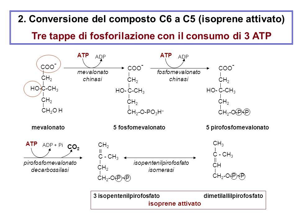 2. Conversione del composto C6 a C5 (isoprene attivato) Tre tappe di fosforilazione con il consumo di 3 ATP mevalonato 5 fosfomevalonato 5 pirofosfome
