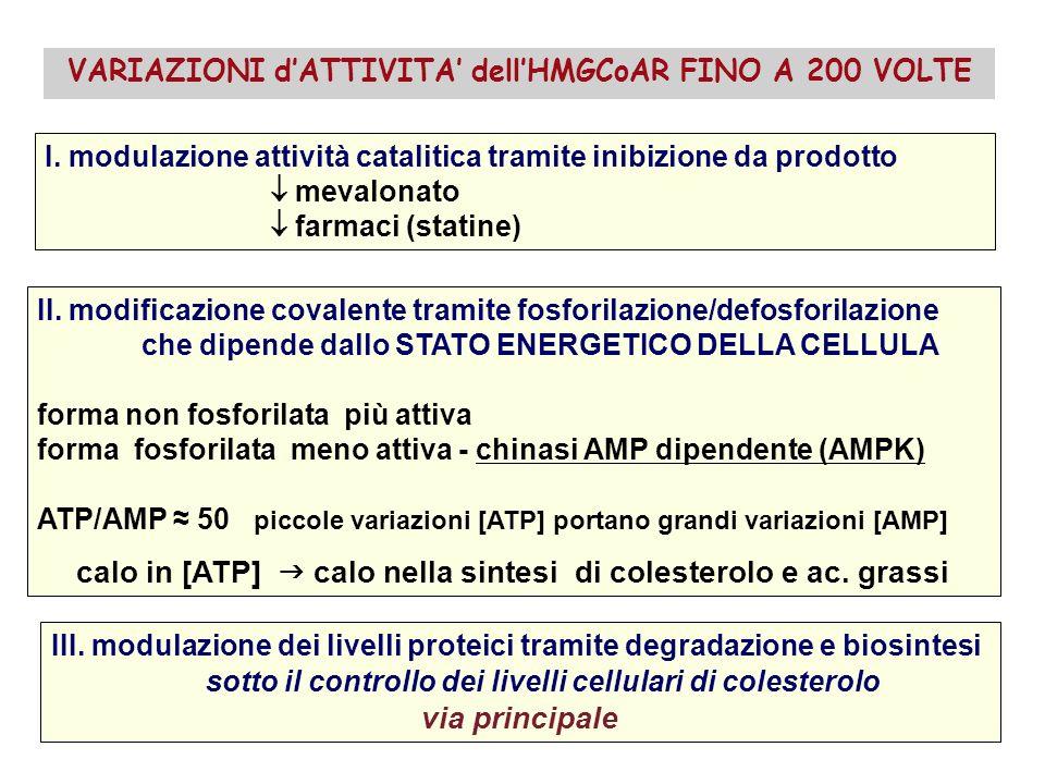 I. modulazione attività catalitica tramite inibizione da prodotto mevalonato farmaci (statine) II. modificazione covalente tramite fosforilazione/defo