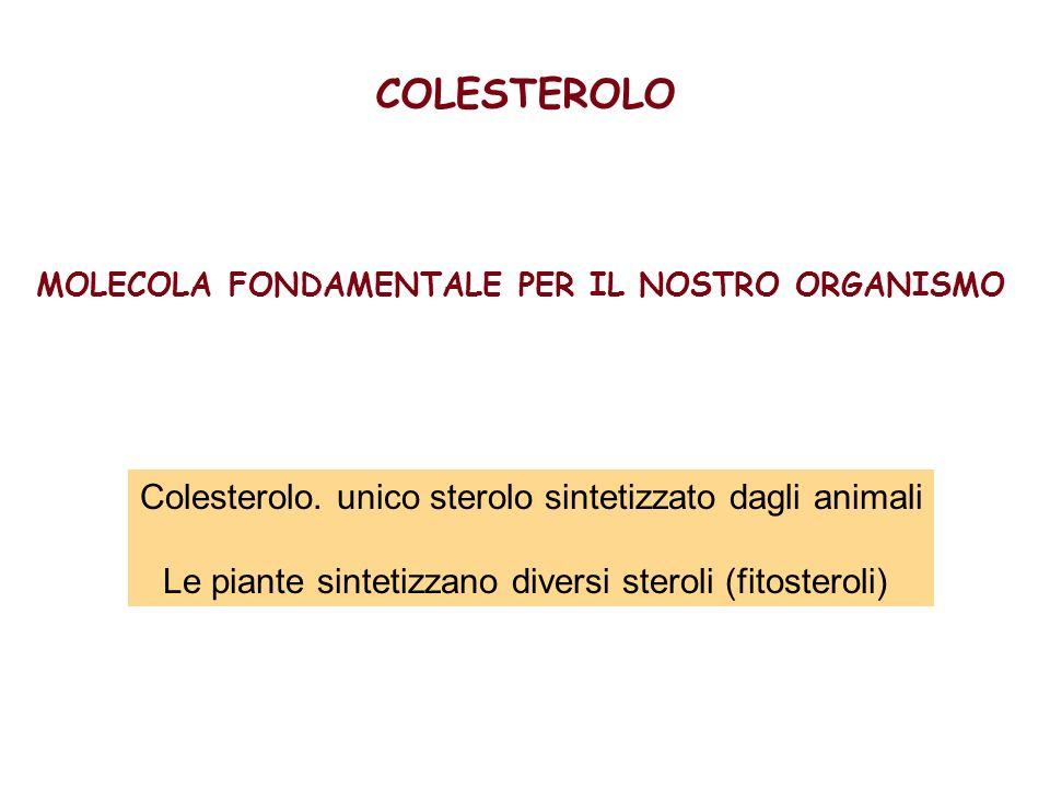 MOLECOLA FONDAMENTALE PER IL NOSTRO ORGANISMO Colesterolo. unico sterolo sintetizzato dagli animali Le piante sintetizzano diversi steroli (fitosterol