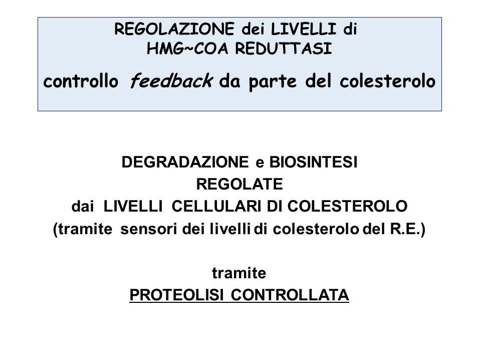 REGOLAZIONE dei LIVELLI di HMG~COA REDUTTASI controllo feedback da parte del colesterolo DEGRADAZIONE e BIOSINTESI REGOLATE dai LIVELLI CELLULARI DI C