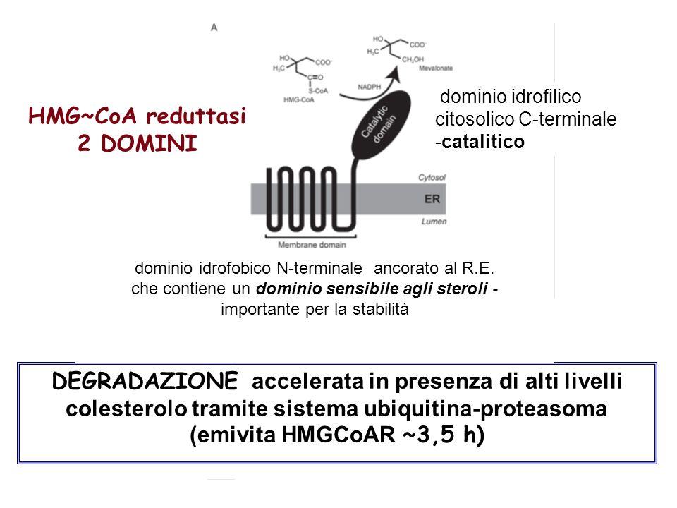 dominio idrofilico citosolico C-terminale -catalitico HMG~CoA reduttasi 2 DOMINI DEGRADAZIONE accelerata in presenza di alti livelli colesterolo trami