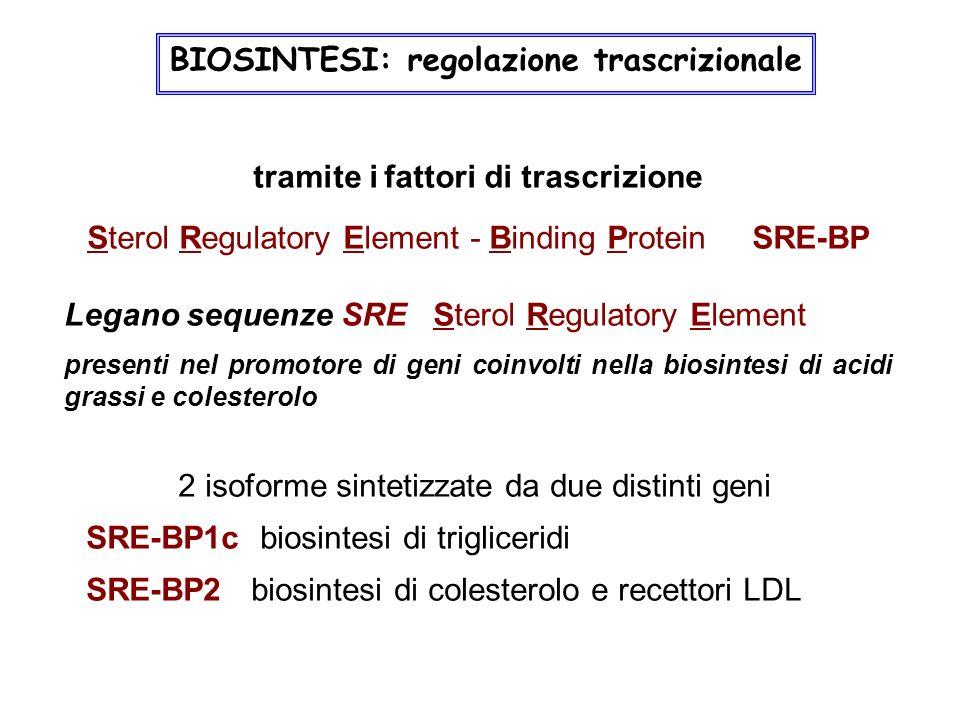 tramite i fattori di trascrizione Sterol Regulatory Element - Binding Protein SRE-BP Legano sequenze SRE Sterol Regulatory Element presenti nel promot