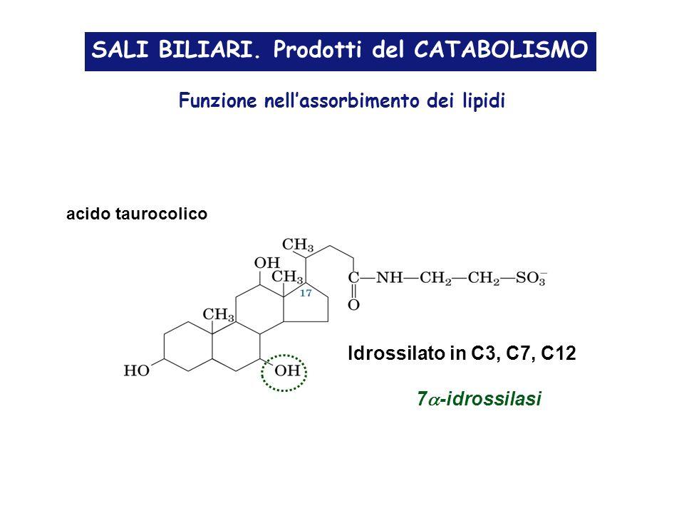 SALI BILIARI. Prodotti del CATABOLISMO acido taurocolico Funzione nellassorbimento dei lipidi Idrossilato in C3, C7, C12 7 -idrossilasi